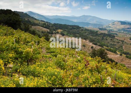 France, Languedoc-Roussillon, Pyrennes-Orientales Department, Vermillion Coast Area, Collioure, vineyards - Stock Photo