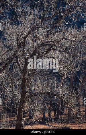 USA, Colorado, Colorado Springs, Garden of the Gods, trees, winter - Stock Photo