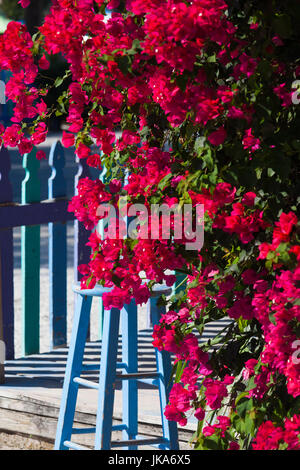 USA, Florida, Gulf Coast, Captiva Island, bougainvilla - Stock Photo