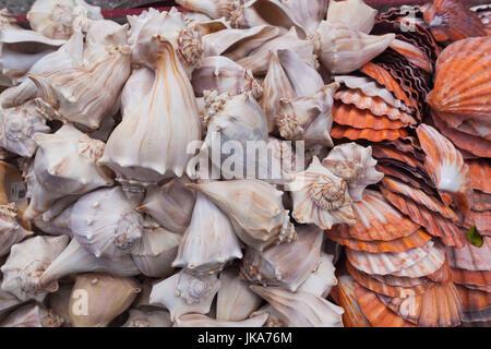 USA, Florida, Florida Keys, Key West, seashells - Stock Photo