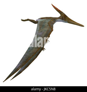 Pteranodon Reptile Side Profile - Pteranodon was a flying carnivorous reptile that lived in North America in the - Stock Photo