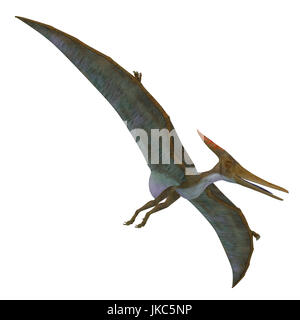 Pteranodon Reptile Soaring - Pteranodon was a flying carnivorous reptile that lived in North America in the Cretaceous - Stock Photo