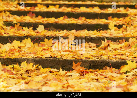 stairs covered with fallen maple leaves in october - Stock Photo
