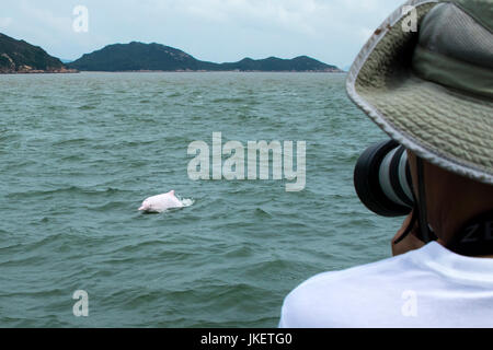 Dolphin watchers watching Indo-Pacific Humpback Dolphins (Sousa chinensis) in Hong Kong. - Stock Photo