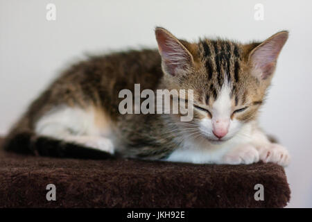 black and brown color kitten sleeping - Stock Photo