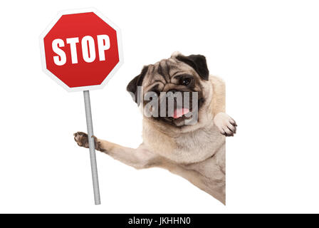 smiling pug puppy dog holding up red traffic stop sign, isolated on white background - Stock Photo