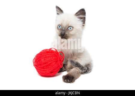 Kitten on white background, kitten playing with ball, summer, Siamese cat - Stock Photo