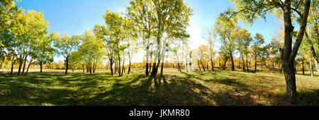 A spectacular morning panoramic view of countryside forest scenery surrounded by green autumn trees. Xinjiang Province - Stock Photo