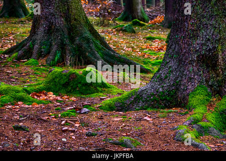 Color image of forest ground / floor with green moss, pine needles and tree roots, spooky fairy tale fantasy mood - Stock Photo