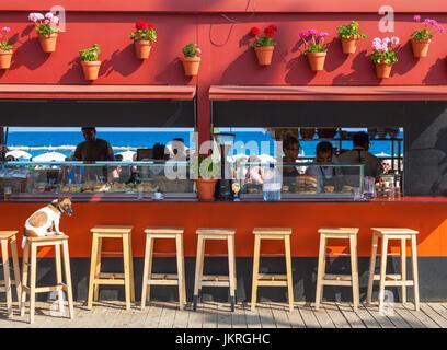 Barcelona Spain Catalunya Spanish beach bar with dog on stool Spain beach bar Barceloneta beach Barcelona Spain - Stock Photo