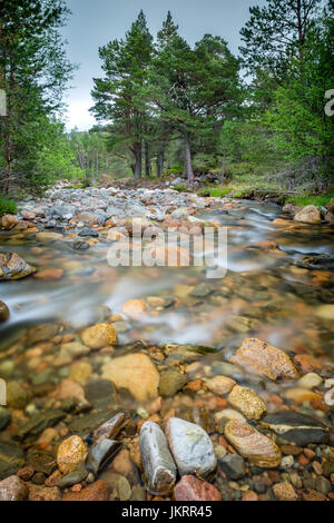Fast flowing mountain river flows down from the Cairngorm Mountains, through the forest, in the Scottish Highlands - Stock Photo