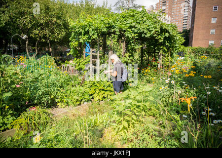 A senior citizen waters the common areas of a community garden in New York on Monday, July 17, 2017.  (© Richard - Stock Photo