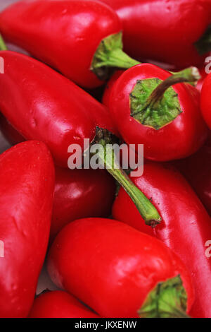 Paprika chili peppers.Red chili. Fresh spice vegetable. Strong hot red chili paprika pepper. - Stock Photo