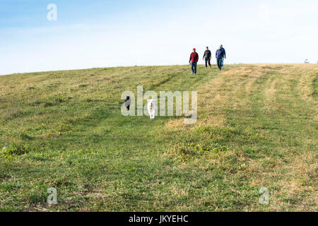 dogs running in the field - Stock Photo