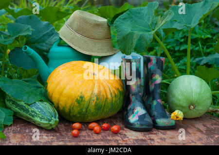 Fresh Organic Vegetables And Garden Tools. Pumpkins, Vegetable Marrow, Red Tomatoes, Rubber Boots, Watering Can - Stock Photo