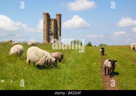 Broadway Tower and sheep, Broadway, Cotswolds, Worcestershire, England, United Kingdom, Europe - Stock Photo