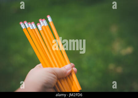 Hands holding school pencils with erasers Stock Photo