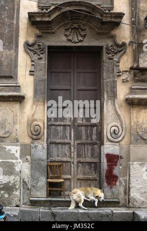Sleeping dog in a Baroque church doorway, in the Via Porto Carini, Capo market, Central Palermo. - Stock Photo