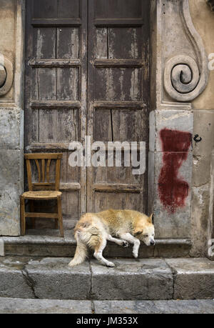 Sleeping dog in a Baroque church doorway, in the Via Porto Carini, Capo market, Central Palermo. - Stock Photo