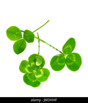 three lucky clovers isolated on white background - Stock Photo