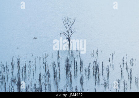Dead Trees Partially Submerged By Rising Flood Water In Lake Nakuru National Park, Kenya - Stock Photo