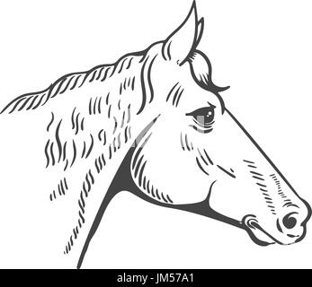 Horse head illustration isolated on white background. Design element for logo, label, emblem, sign, poster, t-shirt - Stock Photo