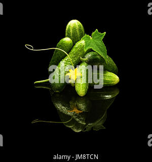 Bunch of fresh cucumbers leaf and flower with water drops isolated on black with real reflection - Stock Photo