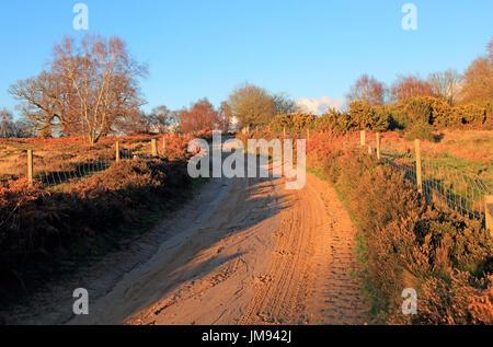 Winter landscape sandy track through heathland, Sutton Heath, Suffolk, England, UK - Stock Photo