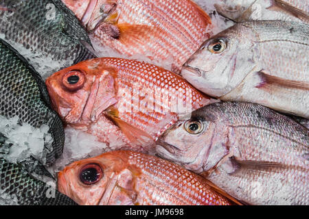 Display of Red Snapper and Tilapia Fish on Ice - Stock Photo
