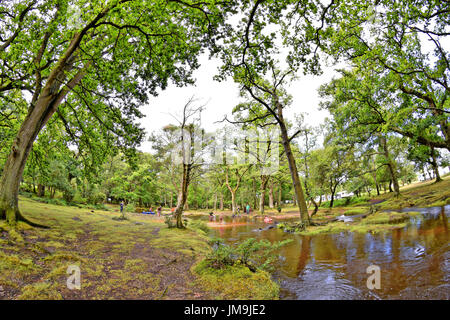 Children playing in a New Forest stream 'Ober Water' next to Aldridge Hill Caravan Park and Campsite near Brockenhurst, - Stock Photo