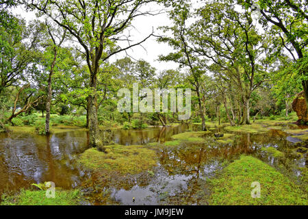 Flooded New Forest stream on a wet summers day, 'Ober Water', New Forest National Park, Brockenhurst, Hampshire, - Stock Photo