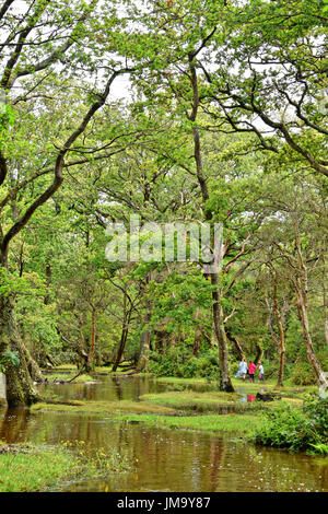 Family walking alongside a flooded New Forest stream near Brockenhurst, Hampshire, England - Stock Photo