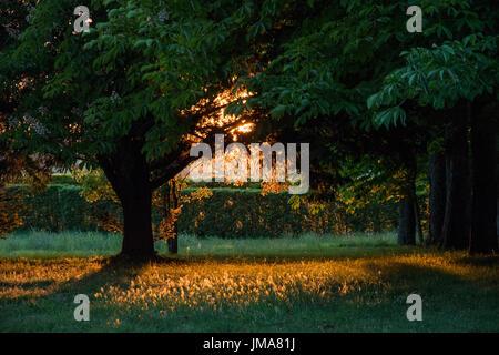 Chateau et Jardins du Rivau, Loire Valley, France, sunset through horse chestnut trees - Stock Photo