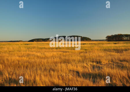Hog Island - Stock Photo