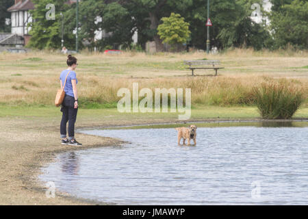 London UK. 27th July 2017. A dog walker enjoys the midl warm weather on Wimbledon Common as temperatures remain - Stock Photo