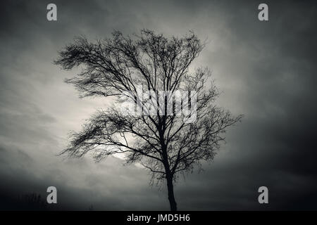 Dark silhouette of bare tree over dramatic cloudy sky. Monochrome toned background photo - Stock Photo