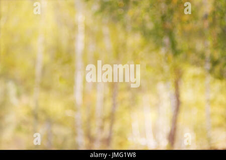 Abstract blurred image of autumn forest, to use a background. - Stock Photo