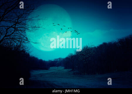Spooky full moon and dark forest - Stock Photo