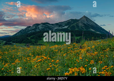 Wildflowers and Mount Crested Butte (12,162 ft.), Gunnison National Forest, near Crested Butte, Colorado USA - Stock Photo