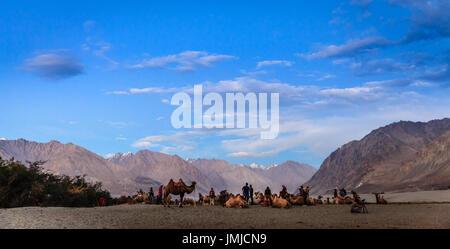 Nubra Valley, Ladakh, Kashmir, Inida, July 13, 2016: Camel hurders and tourists in Nubra Valley, Ladakh district - Stock Photo
