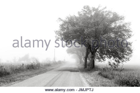 Black and white landscape in the fog with a row of trees on the right, a barbed wire fence on the left, and a single - Stock Photo