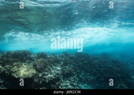 A beautiful healthy coral reef with table corals in the breaking waves at the surface of the Red Sea near Hurghada, - Stock Photo