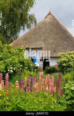 Thatched, Reed roofed house, Pfarrwitwenhaus, Gross Zicker, Moenchsgut, Ruegen Island, Mecklenburg-Western-Pomerania, - Stock Photo