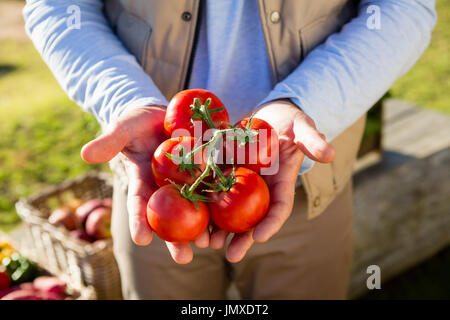 Mid section of farmer holding fresh cherry tomatoes - Stock Photo