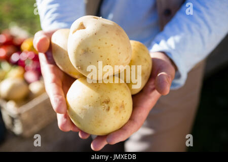 Mid section of farmer holding fresh potatoes - Stock Photo