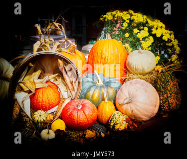 Harvest Pumpkins and Gourds - Stock Photo