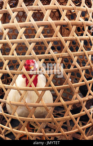 Big fat white feathered chicken locked inside wooden bamboo cage looking out small holes waiting to be slaughtered - Stock Photo