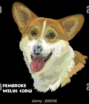 Colored Pembroke Welsh Corgi, isolated vector portrait on black background - Stock Photo