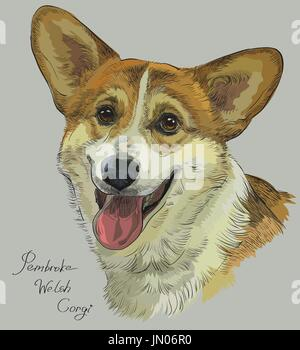 Pembroke Welsh Corgi vector hand drawing illustration in different color on grey background - Stock Photo