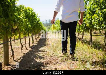 Low section of vintner walking in vineyard on a sunny day - Stock Photo